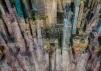 Dario Moschetta NY31 2017 Mixed Media 85 x 60 cm
